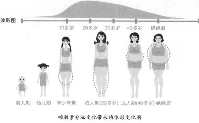 雌激素分泌变化带来的体形变化图